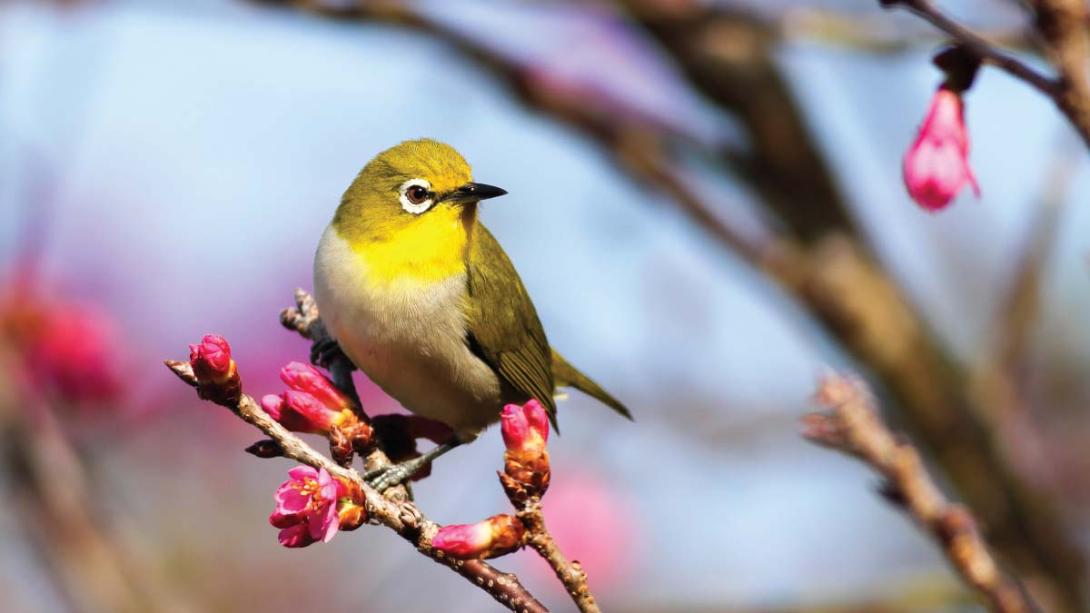 Cameroon: Government plans to develop birding tourism to boost the tourism sector after Covid-19